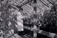 薄荷試験温室
