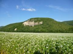 白滝のそば畑
